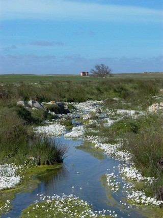 One of the many temporary watercourses in this ari...